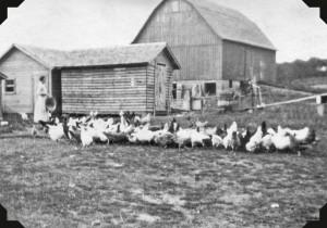 Miller Barn - Jankovich 1
